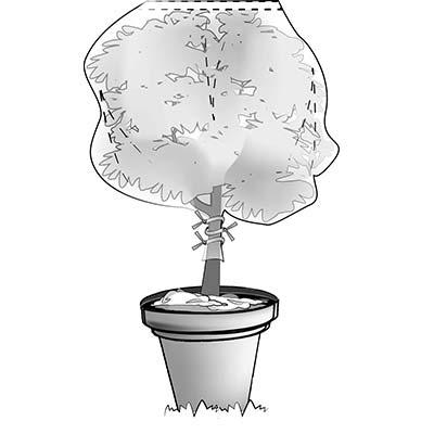 Installazione tessuto antigelo per piante