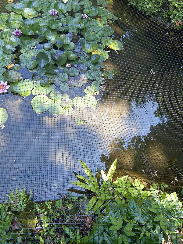 Bird control, Plant & Pond Protection