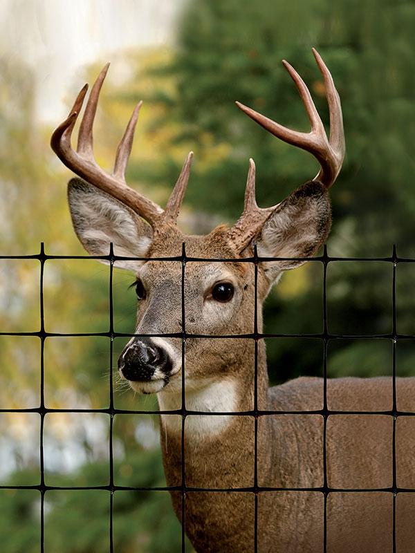 Deer Fence & Elk Fence