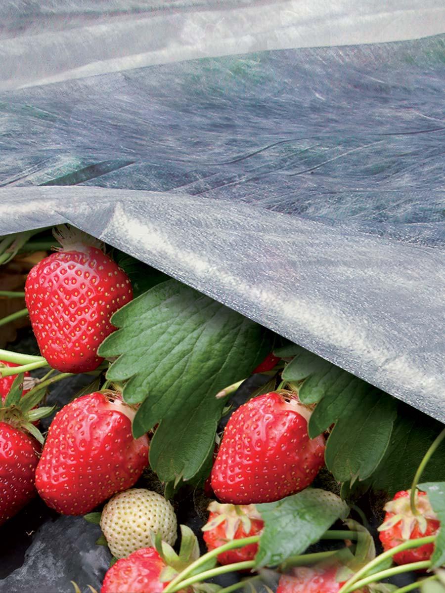 Velo protettivo leggero e forzante della maturazione per frutti e colture