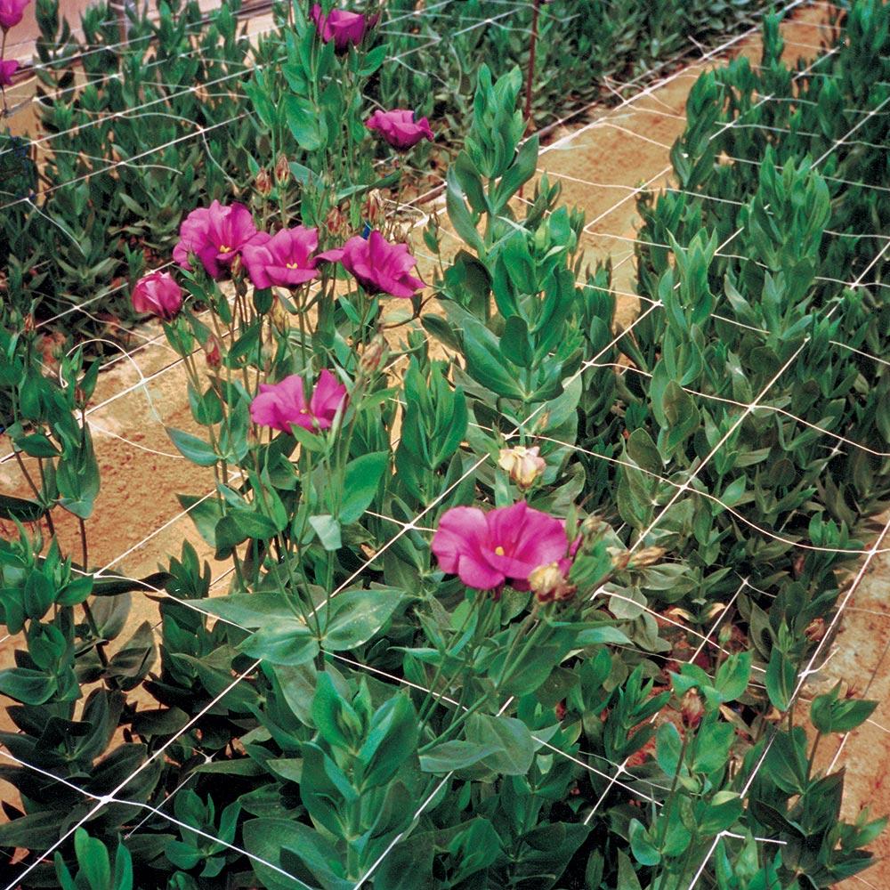 Rete per la coltivazione di fiori recisi