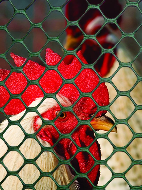 Poultry fence and caging