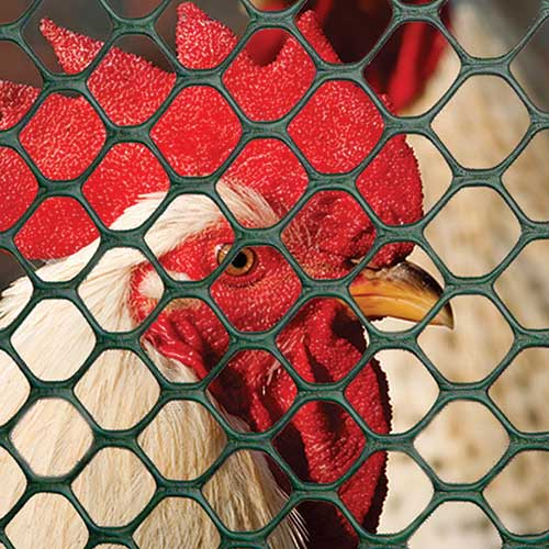 POULTRY FENCE