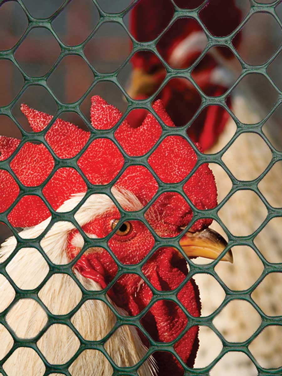 Hexagonal mesh with reinforced and smooth edges for chicken coops, pens and runs