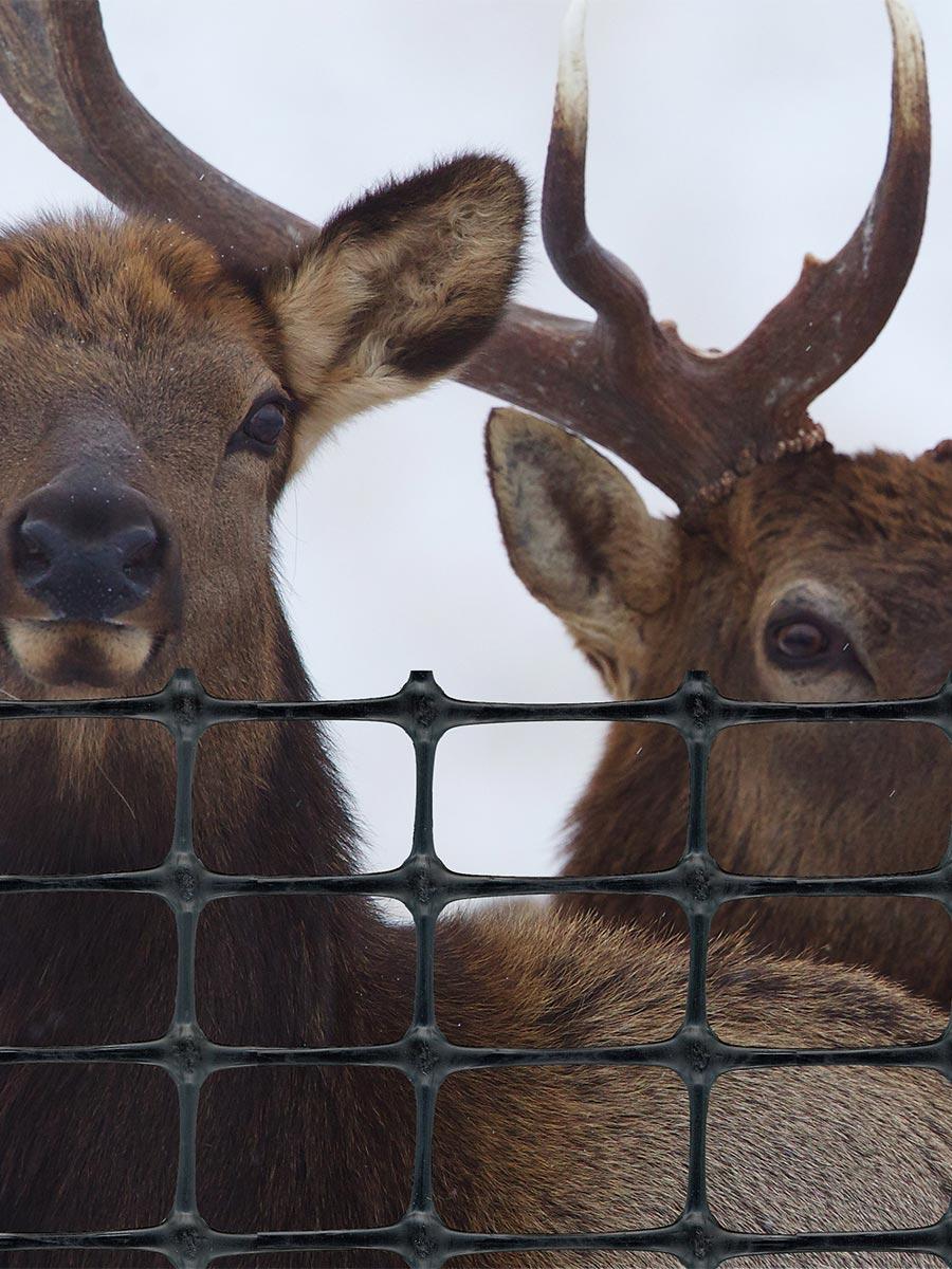 Tenax elk fence for elk damage control